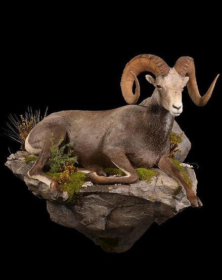 1458243049_lrgstone sheep life size.jpg