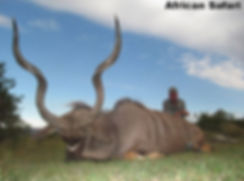 african 2.jpg