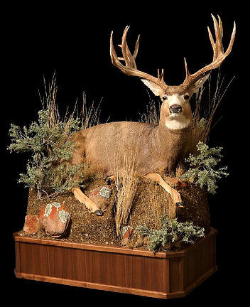 1437683427_lrgMule Deer on Walnut.jpg