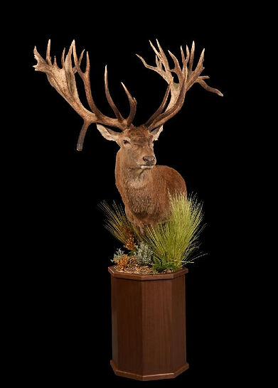 1458243384_lrgred stag on walnut pedesta