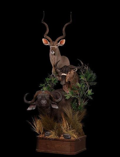 1560956583_lrgCapeBuff,Wildb,Kudu,Pedest
