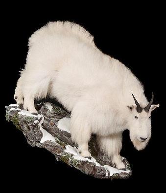 1363626167_lrgmountain goat life size.jp