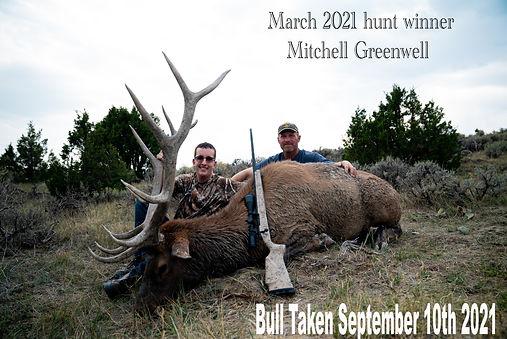 Mitchells bull .jpg