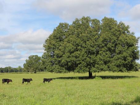 Working Animals & Heritage Breeds
