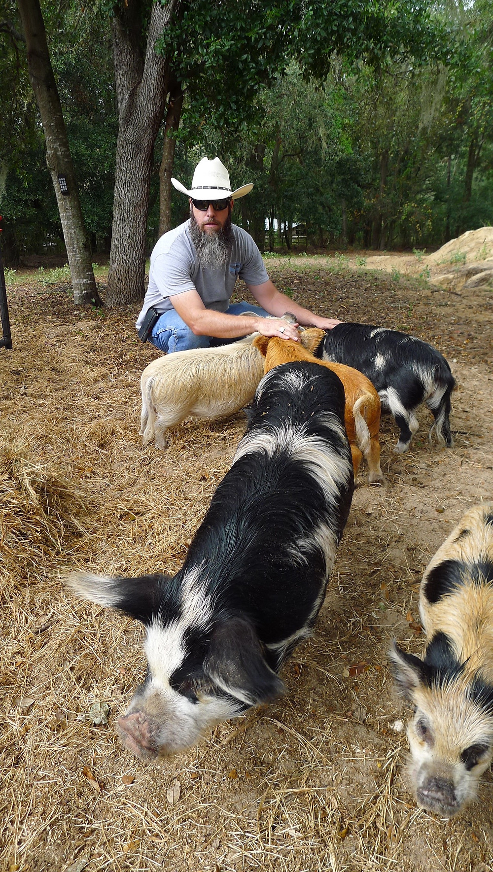 Nathan with his Kunekune pigs.