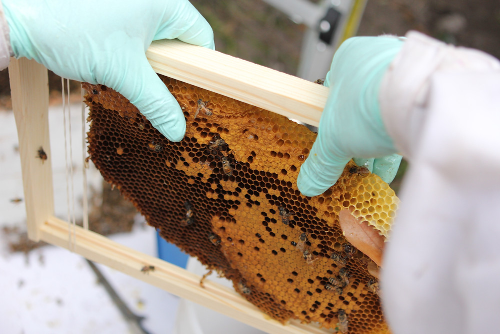 Establishing Rescued Hives