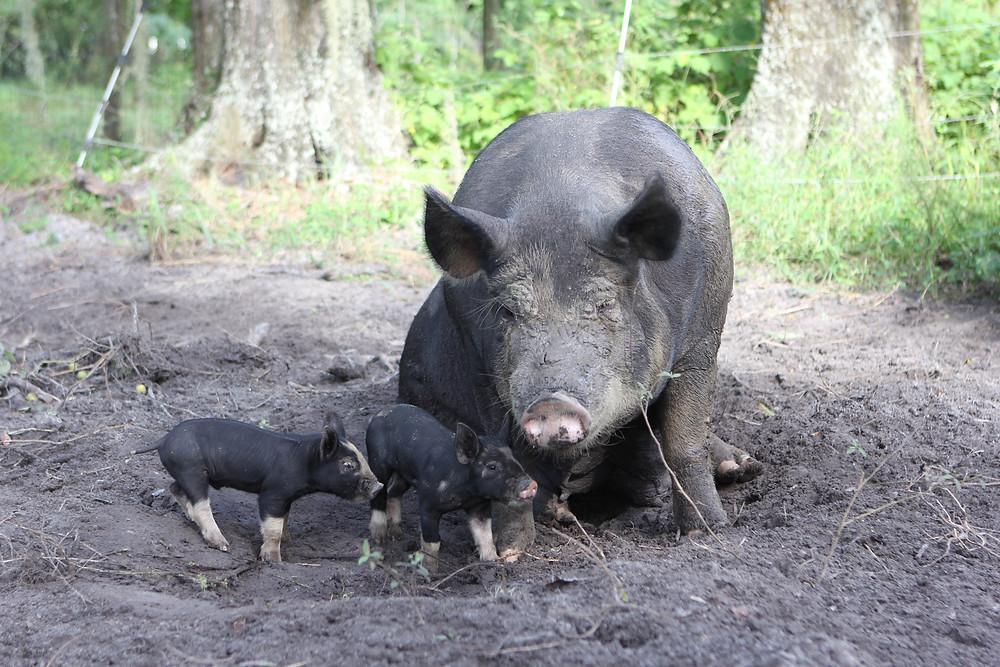 Berkshire Momma