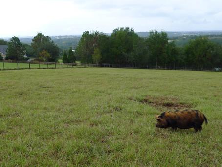 Say Kiaora To Mountain Trail Farm