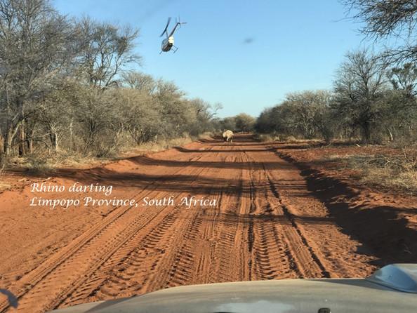 Rhino darting.jpg