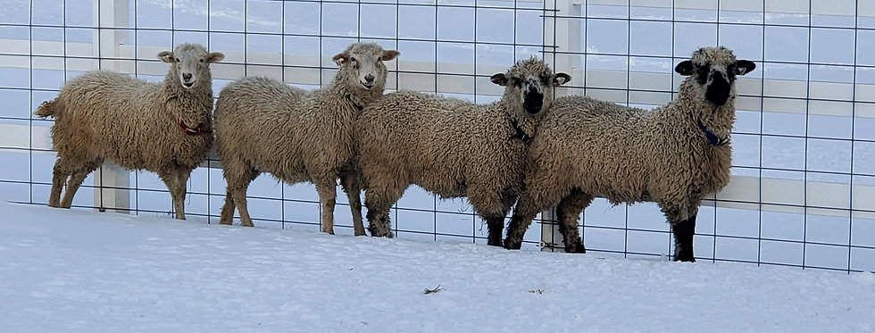 Sheep Manure - 1 gallon