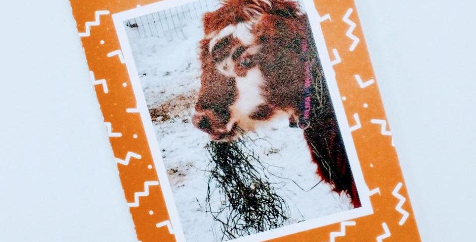 Cow Birthday greeting card