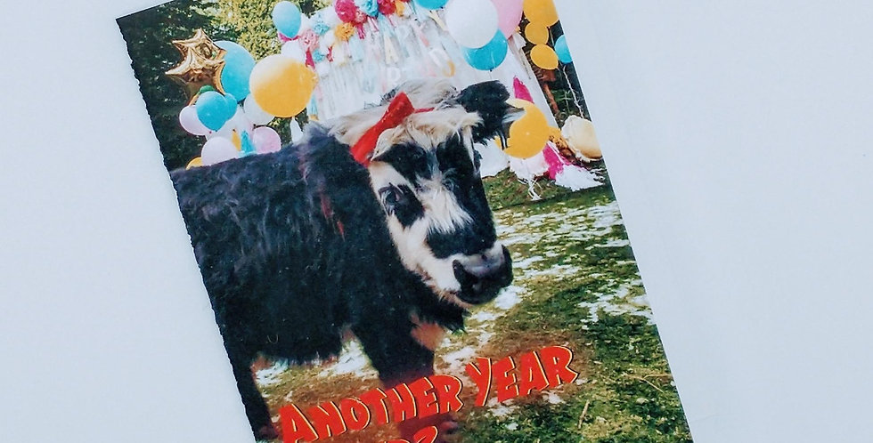 Don't Have a Cow Birthday greeting card
