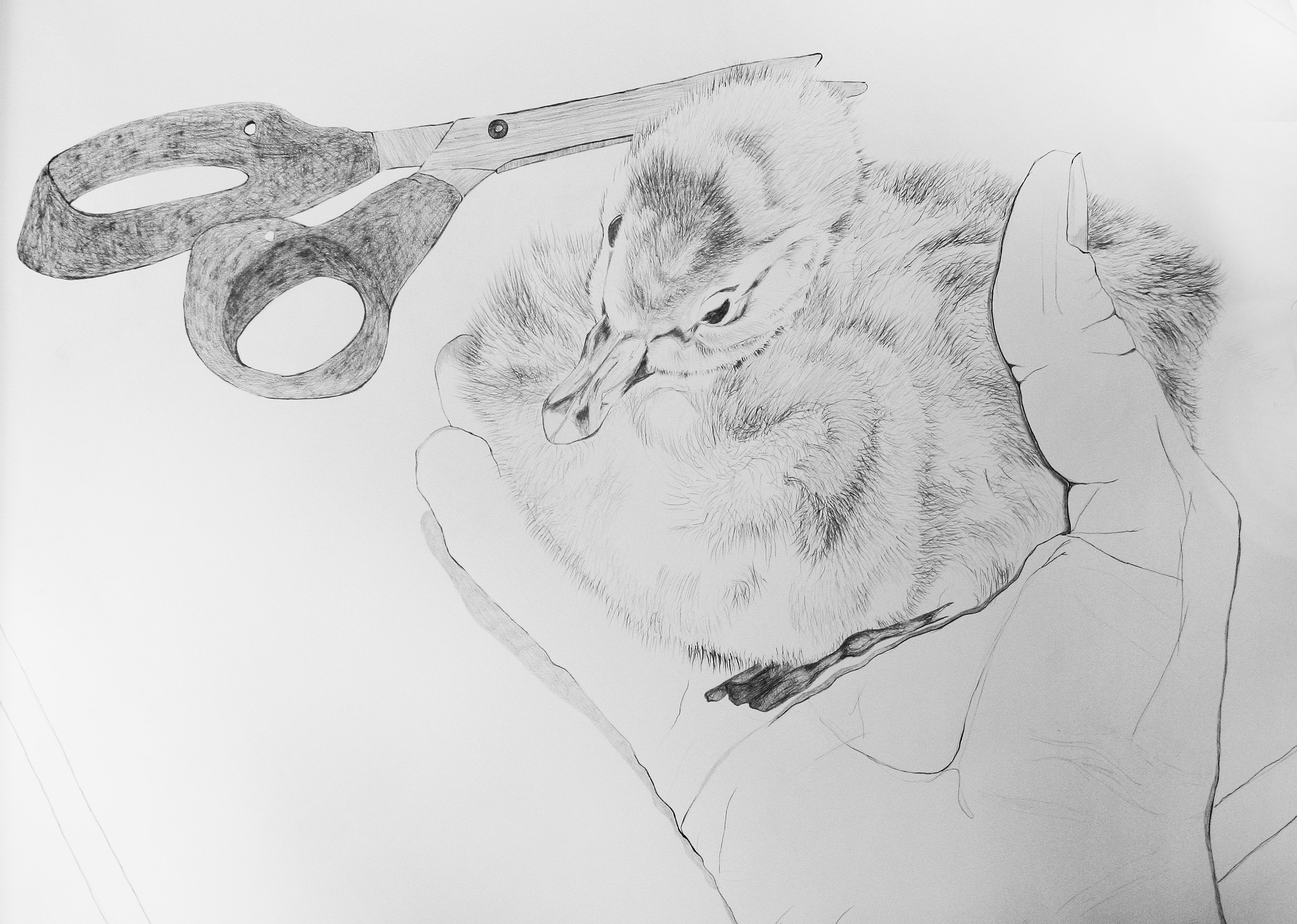drawing_6.jpg