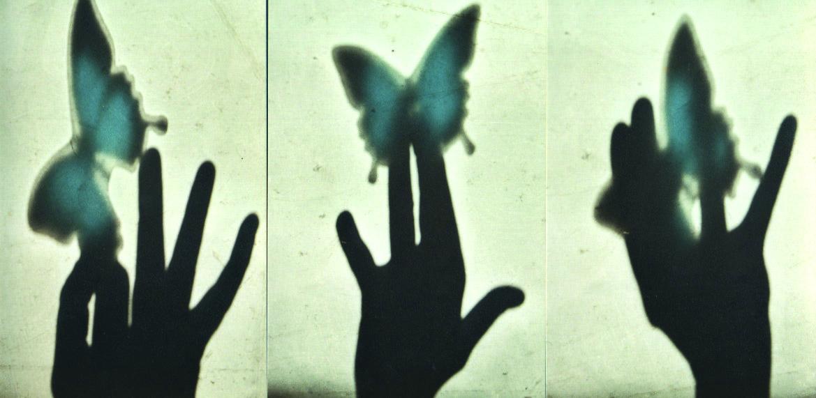 butterfly a .jpg
