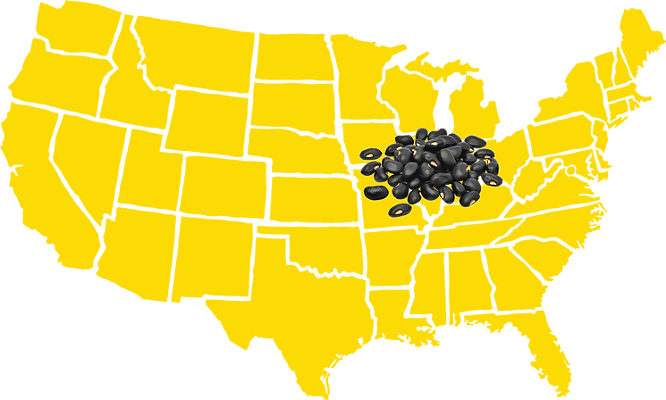 Black beans are grown in the USA