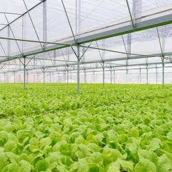 organic-vegetables-PLTF6KG