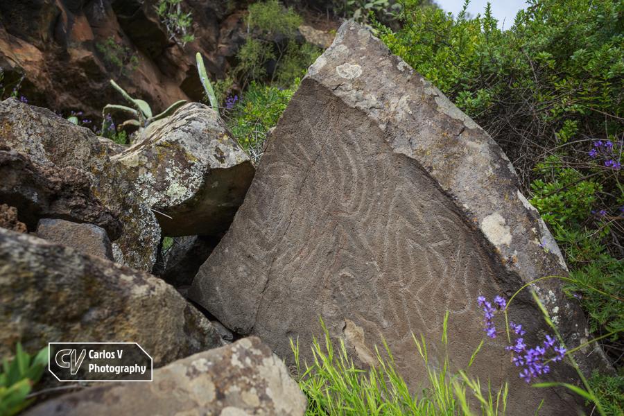 Meandriform petroglyphs on volcanic rock at Buracas, La Palma.  © Carlos Vermeersch