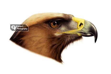Golden Eagle (2015)