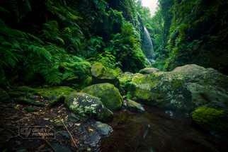 Relict laurel forest