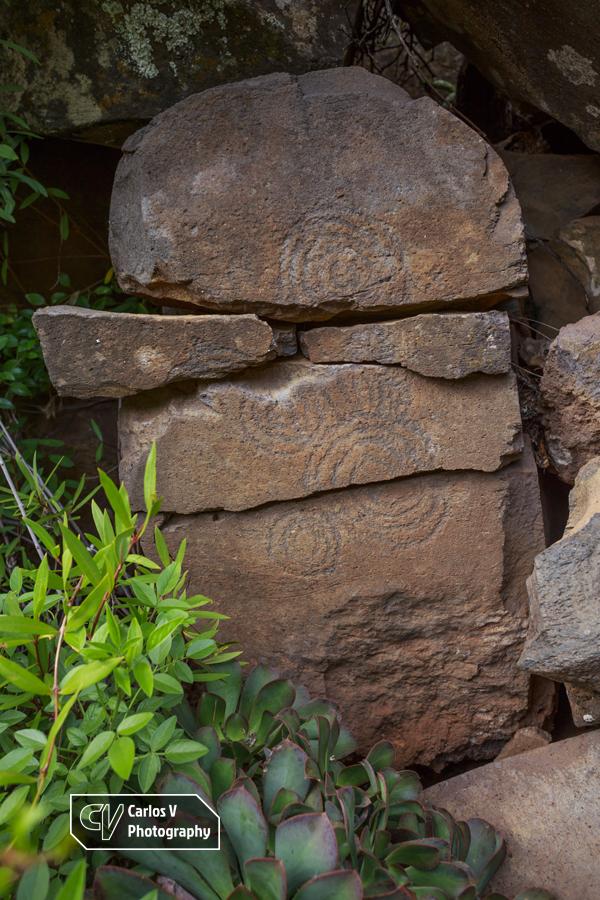 Spiriform petroglyphs on volcanic rock at Buracas, La Palma.  © Carlos Vermeersch