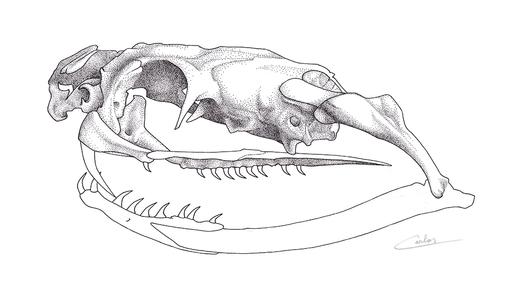 King Cobra skull (WIP) (2016)