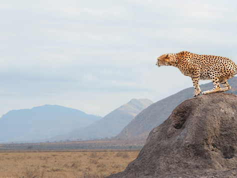Luxury tours and wildlife safari to pamper you at incredible lodges and hotels.