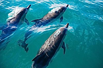 Dolphins Plettenberg Bay