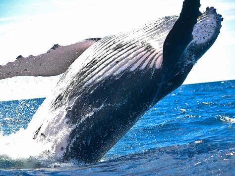 Gqeberha, the new Port Elizabeth awarded Whale Heritage Site status.
