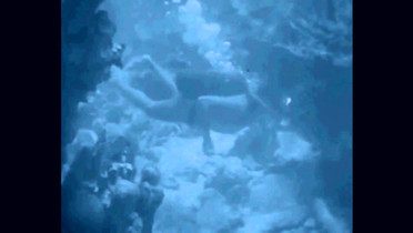THE PHELPS - Manfish