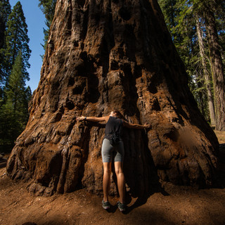 sequoia-national-park-photography-1-20.j