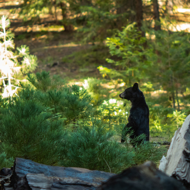 sequoia-national-park-photography-1-42.j