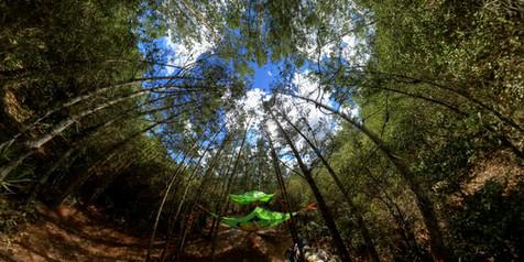 juniper-springs-360-1.jpg