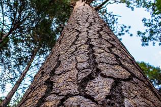 yosemite-national-park-photography-1-24.
