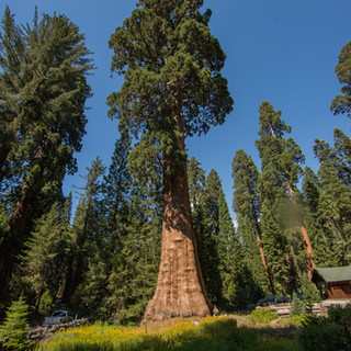 sequoia-national-park-photography-1-18.j