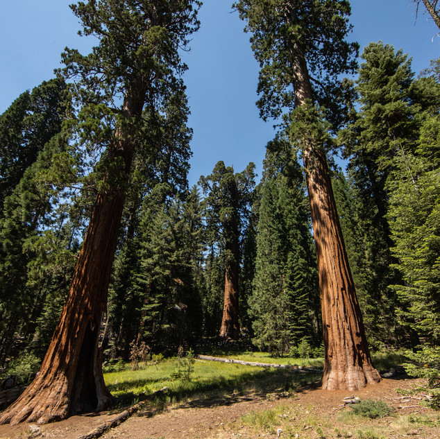 sequoia-national-park-photography-1-16.j