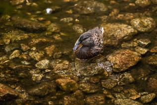yosemite-national-park-photography-1-35.
