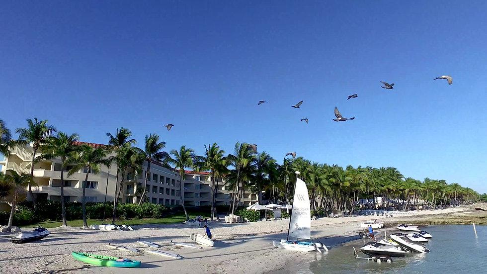 Casa Marina Dock Key West Stock Video