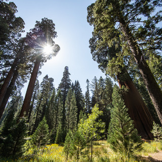 sequoia-national-park-photography-1-22.j