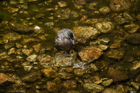 yosemite-national-park-photography-1-34.