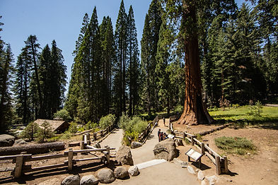 sequoia-national-park-photography-1-17.j