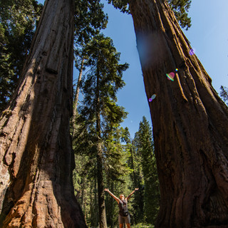 sequoia-national-park-photography-1-21.j