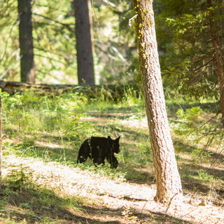 sequoia-national-park-photography-1-43.j