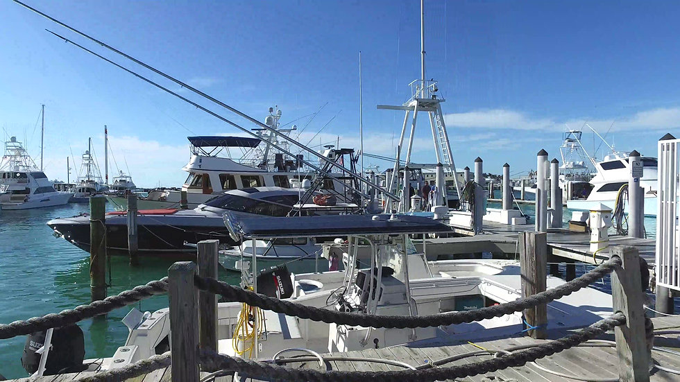 Conch Harbor Marina Key West Stock Video