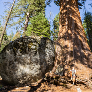 sequoia-national-park-photography-1-7.jp