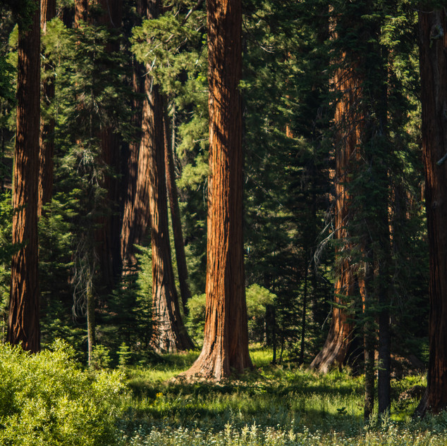sequoia-national-park-photography-1-31.j