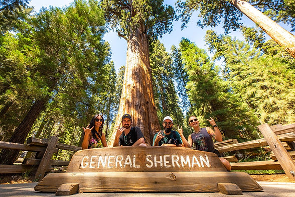 sequoia-national-park.jpg