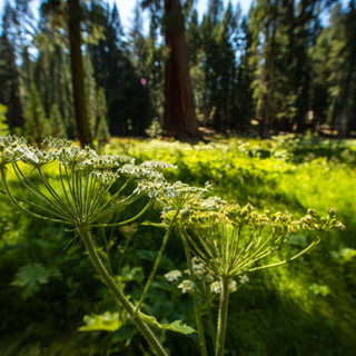 sequoia-national-park-photography-1-25.j