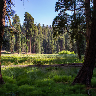 sequoia-national-park-photography-1-8.jp