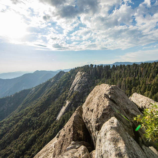 sequoia-national-park-photography-1-48.j