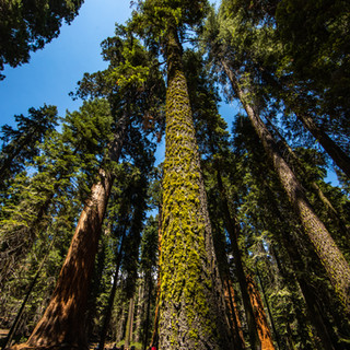 sequoia-national-park-photography-1-14.j